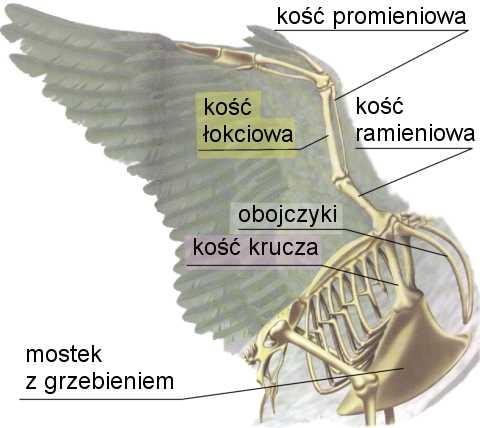 Dlaczego Ptaki Latajs